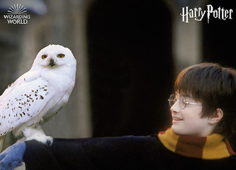 Harry Potter Dizisi Başlıyor