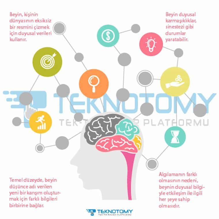 İnsan Beyni Nasıl Çalışır?