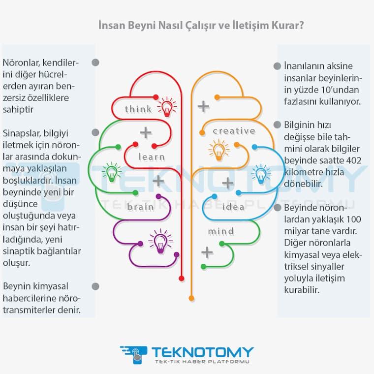 İnsan Beyni Nasıl Çalışır